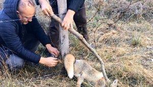 Ormanda dikenli tele takılan yavru tilki kurtarıldı