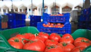 Rusya'ya domates ihracında kota 199,3 bin tonu buldu, siparişler durduruldu