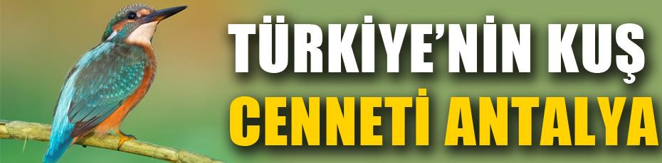 2020'de en fazla kuş türü, Antalya'da gözlendi