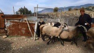 60 yıllık çoban: Biz korona morona görmüyoruz