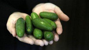 'Baby' avokado, neden daha pahalı ?