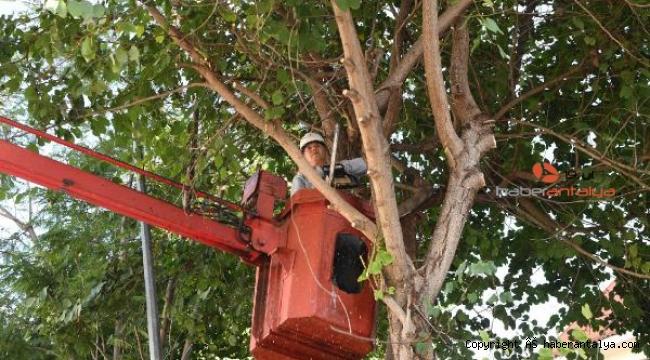 Başkan Esen: Konyaaltı'na 260 bin bitki diktik