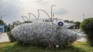 'Çevreci orfoz'un mesajı Asya ve Avrupa'ya ulaştı