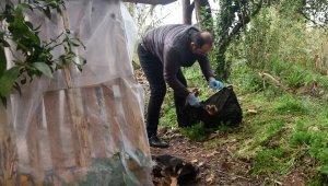 Hayvanseverlerin beslediği 12 yavru köpekten 2'si zehirlendi, 4'ü kayıp