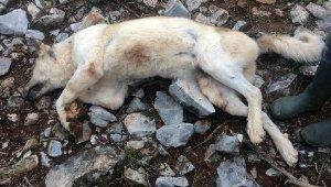 Köpeğini 'fazla ekmek yiyor' diye öldüren adamda ne ceza verildi ?