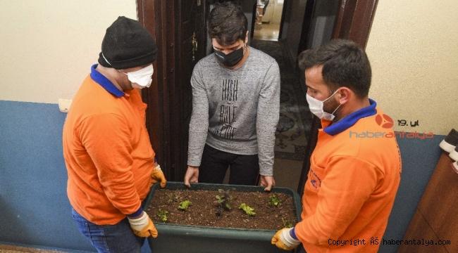 Muratpaşa Belediyesi'nden saksıda marul,maydonoz ve fesleğen dağıtımı