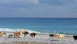 Plajları kısıtlamada onlara kaldı. Ortaya güzel görüntüler çıktı