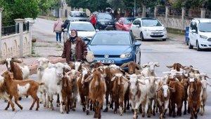 'Şehirdeki çoban' Menşure Teyze