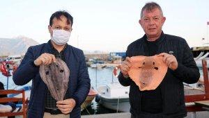 Balon balığının derisi, yeni istihdam alanı sağlayacak