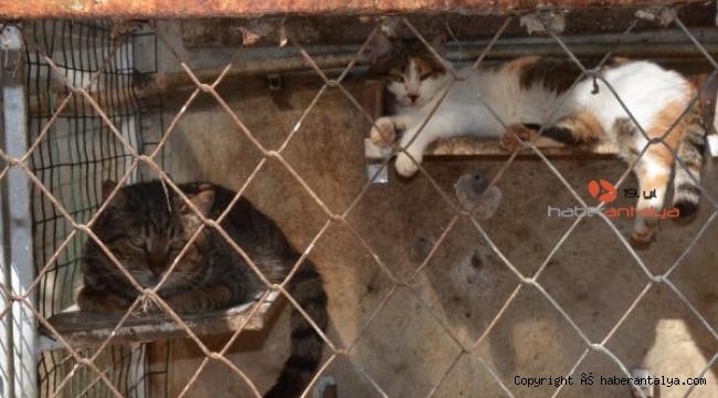 Cezaevinden yazılan dilekçeyle hayvanlar ölmekten kurtuldu