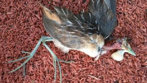Ölü bulunan kuş Türkiye'de ilk defa görülen türmüş