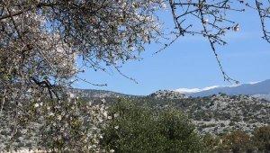 Torosların karıyla badem çiçekleri karşı karşıya