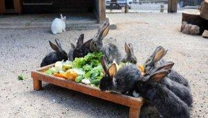 Antalya Hayvanat Bahçesi'nde yeni misafir sevinci