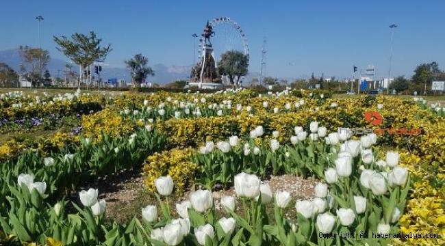 Antalya lale açtı