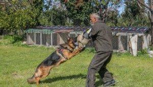 Irk köpeklere VIP eğitim
