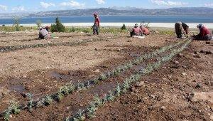 Burdur Gölü'nün reçetesi; 'susuz tarım'