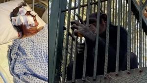 Kafesten kaçan maymun otel çalışanını hastanelik etti !