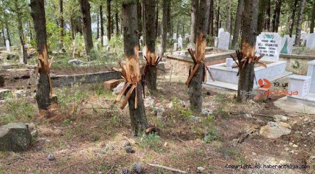 Mezarlıktaki ağaçlarda gizemli balta izleri !
