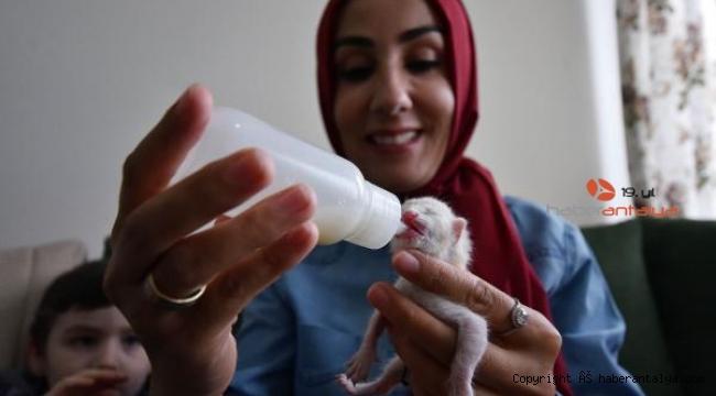 Ölümden kurtarılan yavru kedileri, biberonla besliyor
