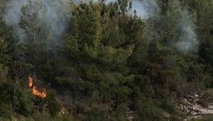 Orman yangını sonrası ağaçları kestiler !