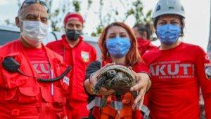 Uçurumda sıkışan kaplumbağaya AKUT yardımı