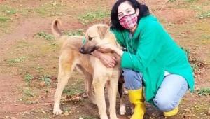Bin bir emekle beslediği köpeklerden birini ölü bulunca yıkıldı