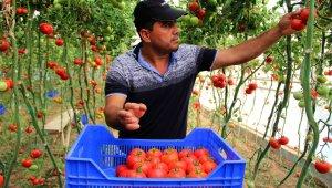 Çiftçi de dertli. Zam şampiyonu domatesin faydası kime ?