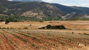 Akdeniz Üniversitesi bitkileri işleyerek paraya dönüştürecek