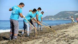 Alanya Belediyesi'nden sahilde yosun temizliği