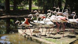 Antalya'nın misafirleri flamingolar