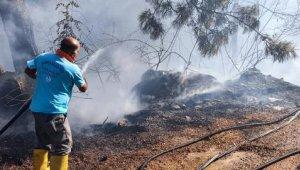 Alanya'da çıkan yangında 2 dönümlük alan zarar gördü