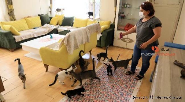 Bütün parasını kedilere harcadı, icra kapıya dayandı