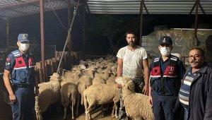 Kayıp 46 koyun ve kuzu bakın nerede bulundu ?