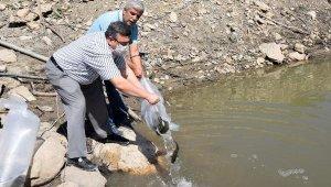 Toptaş Göleti'ne 20 bin sazan bırakıldı
