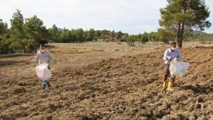 Büyükşehirden çiftçiye hibe buğday tohumu