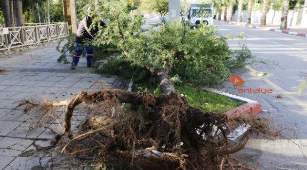 Antalya uçuyor! Şiddetli rüzgâr ağacı devirdi | Antalya hava durumu