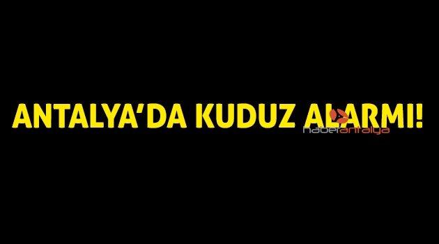 Antalya'da 7 mahallede kuduz karantinası