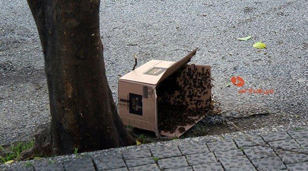 Antalya'da arı istilası!