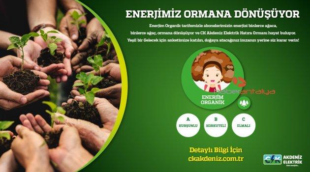 CK Akdeniz Elektrik abonelerine 'hatıra ormanı' anketi
