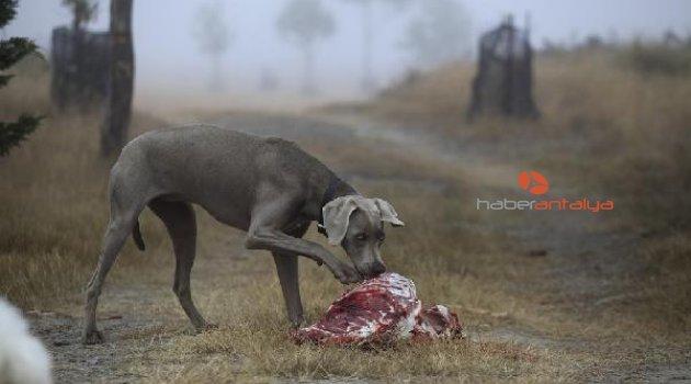 Dikkat! Evcil hayvanınıza çiğ et veriyorsanız...