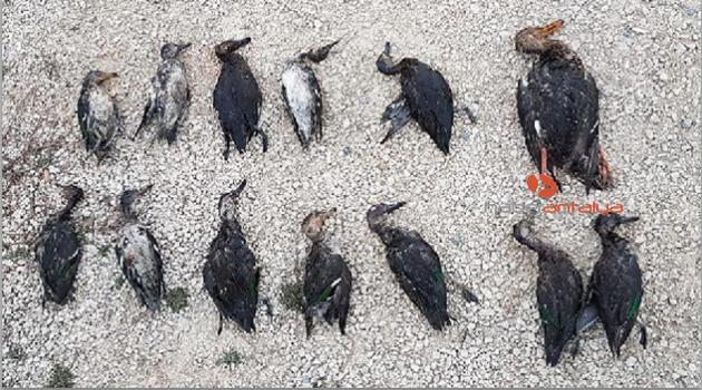 Kaçak ördek avcılarına 10 bin lira ceza