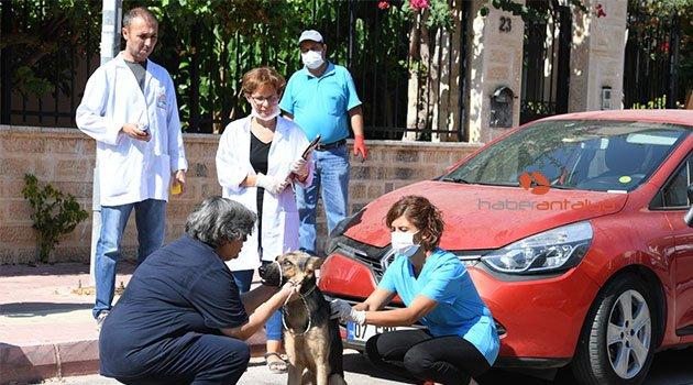 Konyaaltı Belediyesi, kuduz aşısı çalışması başlattı