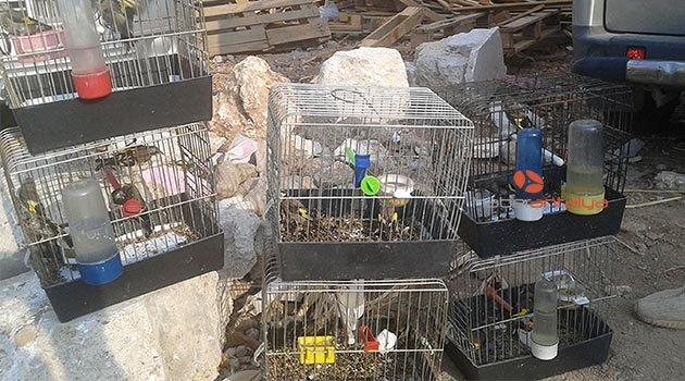Koruma altındaki saka kuşu satışına 11 bin lira ceza