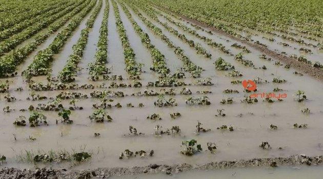 Antalya'da şiddetli yağmur pamuk tarlalarını göle çevirdi