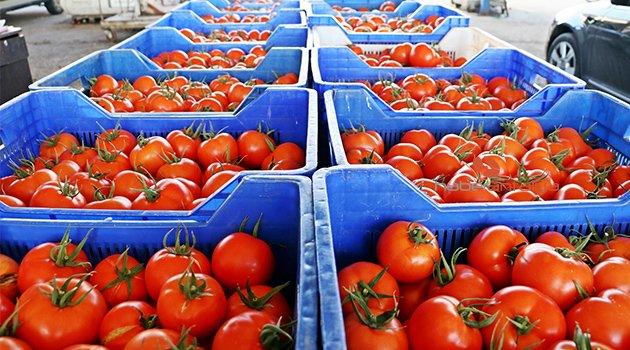 Antalya'daki hortum felaketi sonrası domates ve biberde zam beklentisi