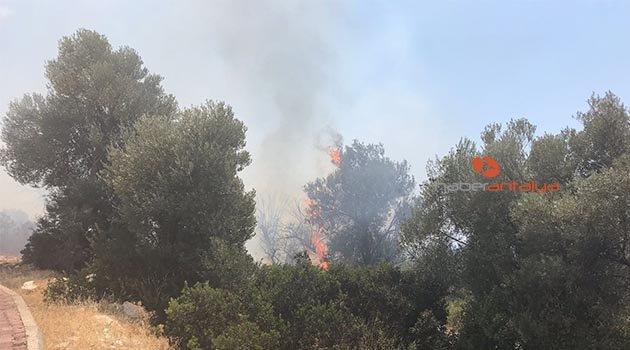 Demre'de yangın korkuttu