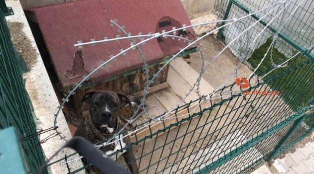 Köpek kavgası kanlı bitti: 2 ölü, 1 yaralı