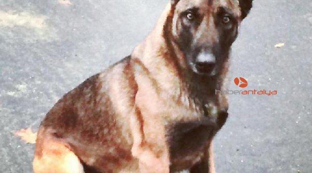 Polis köpeğini ısıran adam tutuklandı