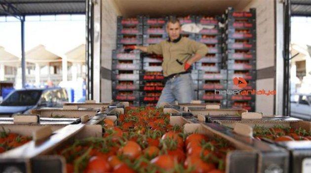 Rusya'ya 1 yıl 11 ay sonra ilk domates ihracatı