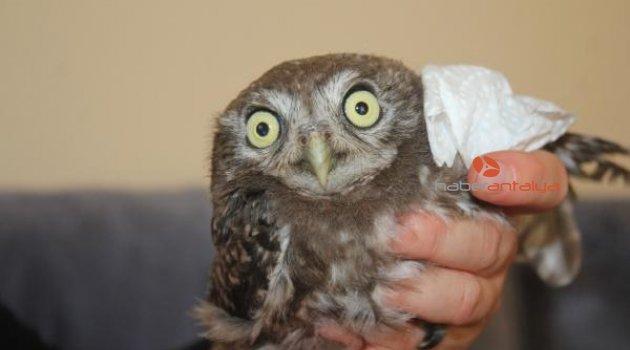 Sağlıkçı Esra'nın tedavi ettirdiği yaralı baykuş, doğaya bırakıldı
